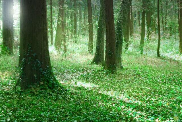 森に関する夢占い