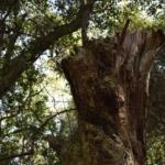 気多大社の木