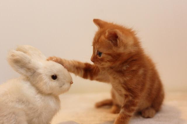 ぬいぐるみと友達になった猫