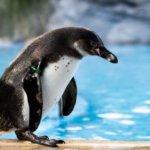 ペンギン系女子の特徴