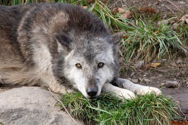 オオカミ系女子の特徴